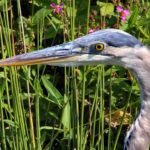 Blue Heron, Recklesstown Way, Chesterfield