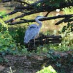 Blue Heron, Recklesstown Way, Chesterfield NJ