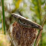 Grasshopper, Recklesstown Way, Chesterfield NJ