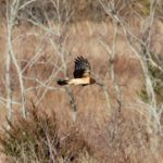 Northern Harrier Park on Province Line Road & Rt. 537
